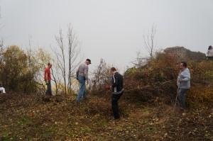 A kivágott fák eltakarítása